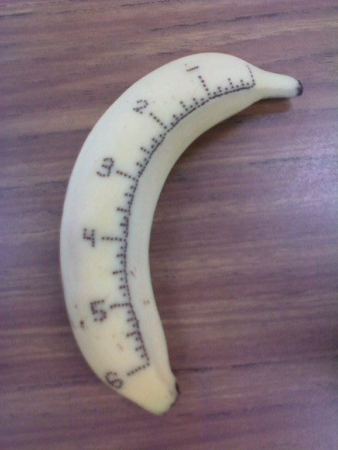 A banana with ruler markings beautifully bruised in, with a pin.