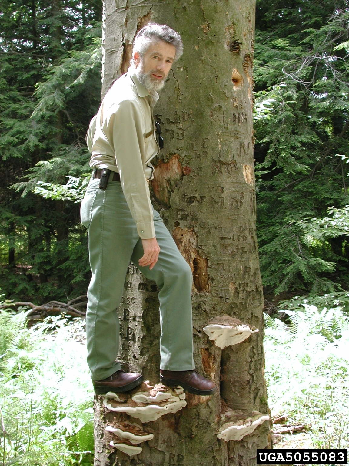 A man standing on an actual mushroom shelf growing out of a tree.