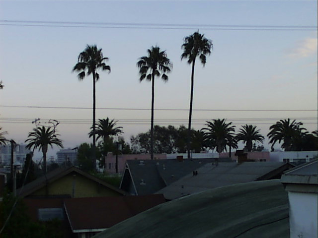 A photo looking over the rooftops of Venice, CA, looking toward the ocean.